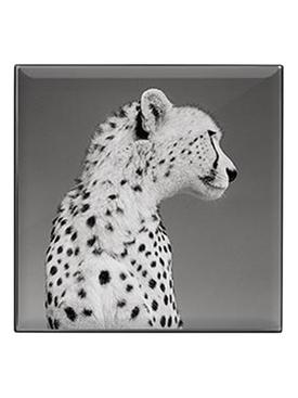 Luminescent Eye Shade, Cheetah