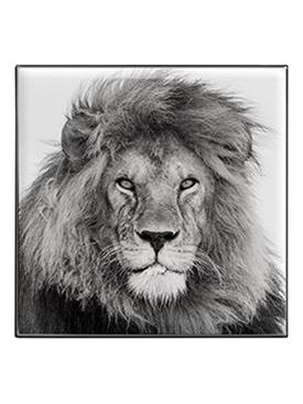Luminescent Eye Shade, Lion