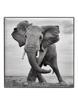 Luminescent Eye Shade, Elephant
