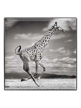 Luminescent Eye Shade, Giraffe