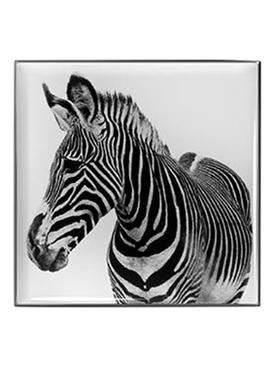 Luminescent Eye Shade, Zebra